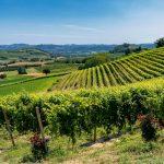 Strade del Vino del Monferrato