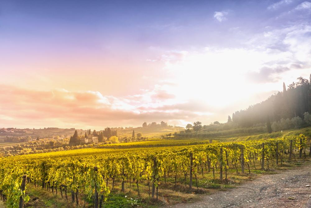 Le Strade del Vino in Italia