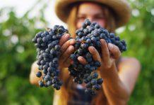 Una piccola guida sulle caratteristiche del vino biologico e la migliore selezione per scegliere i migliori prodottti sostenibili