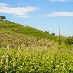 Gli incantevoli vitigni del Lazio