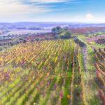 Aglianico: vitigni, territorio e cantine