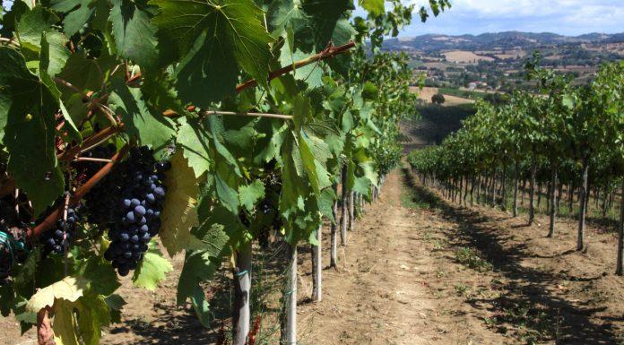 Alla scoperta di Terra Fageto con Wineowine