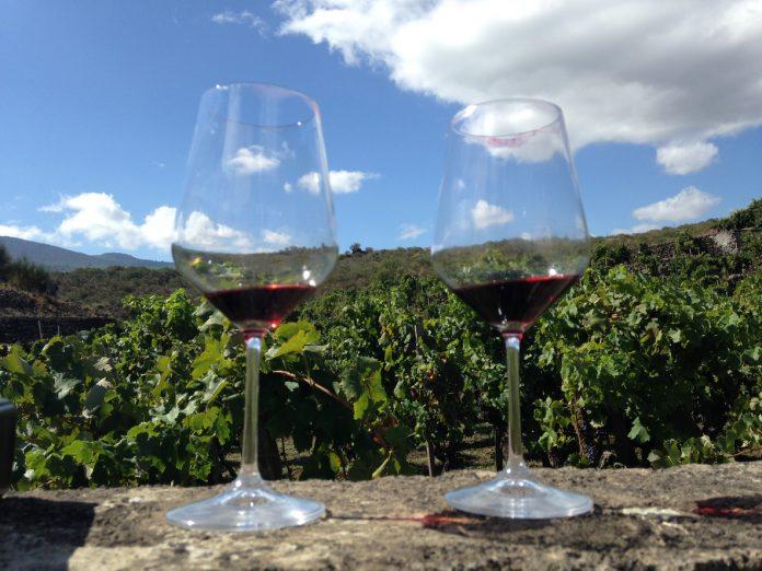 La Valle della Luna: un vino che sa di Sicilia