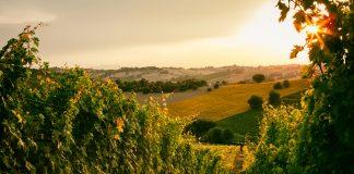 Cantina Bastianelli: il legame tra uomo e natura