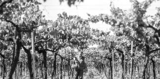 Azienda San Vitis, storia di una passione