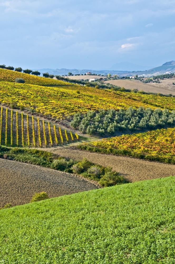 Cerasuolo d'Abruzzo - Territorio