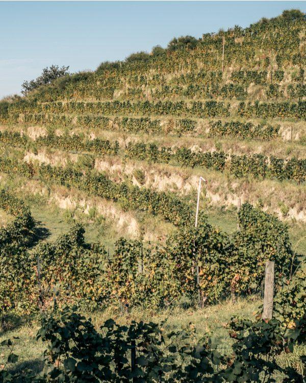 vino marche_1510885781
